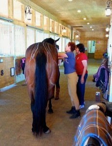 Jo-Ann Wilson Sports Massage @ Pepper Hill Farm.