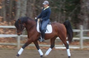 Dressage Clinic with Koren Libby @ Dressage Clinic with Koren Libby | South Thomaston | Maine | United States