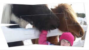 PONY RIDE SUNDAY - Icelandic Horses @ PONY RIDE SUNDAY